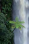 Tree fern & waterfall
