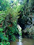 Waikato natural bridge walk