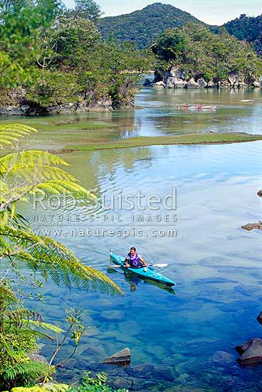 Sea Kayakers in Bark Bay Inlet, Abel Tasman National Park, Tasman District, Tasman Region, New Zealand (NZ) stock photo.