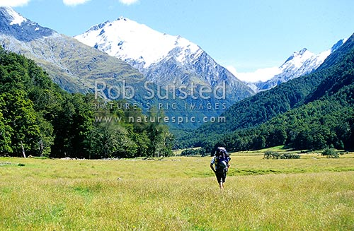 Mountaineer walking up Matukituki Valley en route to Mount (Mt) Aspiring. Mount (Mt) Barff left and Matukituki Saddle right, Mount Aspiring National Park, Queenstown Lakes District, Otago Region, New Zealand (NZ) stock photo.