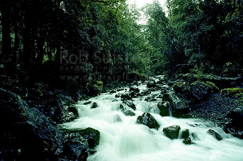 Atiwhakatu side creek, Tararua Forest Park, Masterton District, Wellington Region, New Zealand (NZ) stock photo.