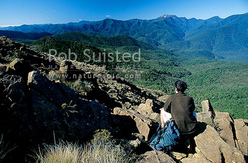Tramper looking over Pelorus Valley to Mount (Mt) Fishtail (right) from mineral rich Dun Mountain(1129m)-'ultramafic', Mount Richmond Forest Park, Marlborough District, Marlborough Region, New Zealand (NZ) stock photo.