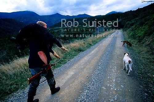 Rai Valley New Zealand  city pictures gallery : Nigel Couper Pig hunting at Pelorus Bridge, Rai Valley, Richmond ...