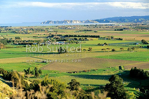 Overlooking the Gisborne plains towards Young Nick's Head, Gisborne, Gisborne District, Gisborne Region, New Zealand (NZ) stock photo.