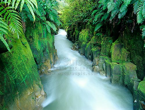 Whirinaki River running through the Te Whaiti Nui A Toi Canyon gorge, draped with ferns, Whirinaki Forest Park, Whakatane District, Bay of Plenty Region, New Zealand (NZ) stock photo.
