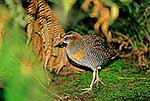 Banded Rail