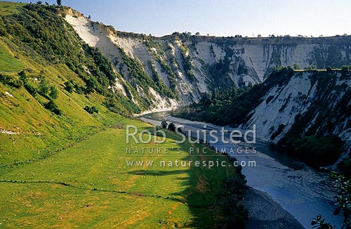 White siltstone cliffs above the Rangitikei River, near Mangaweka, Mangaweka, Rangitikei District, Manawatu-Wanganui Region, New Zealand (NZ) stock photo.