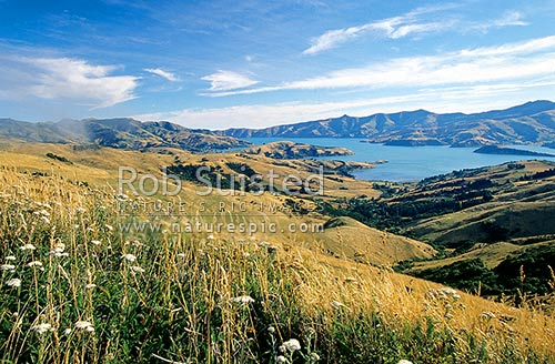 Akaroa Harbour from the summit of Banks Peninsula. Onawe Peninsula. Far right, Banks Peninsula, Christchurch City District, Canterbury Region, New Zealand (NZ) stock photo.