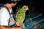 Kakapo with conservation worker