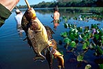 Piranha fishing, Brazil