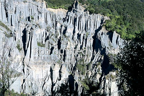 Putangirua Pinnacles in the Haurangi Forest Park. Fluted erosion forming pillars, Te Kopi, South Wairarapa District, Wellington Region, New Zealand (NZ) stock photo.