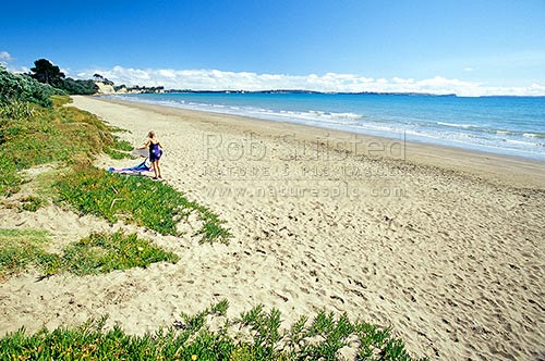 Long Bay Beach and Regional Reserve near Torbay, Auckland, North Shore City District, Auckland Region, New Zealand (NZ) stock photo.