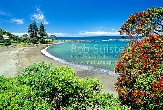 Mathesons Bay, Leigh, Rodney District, Auckland Region, New Zealand (NZ) stock photo.