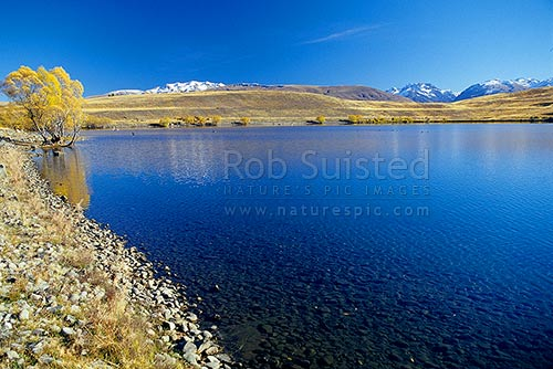 Early calm autumn morning on Lake McGregor, Tekapo, MacKenzie District, Canterbury Region, New Zealand (NZ) stock photo.