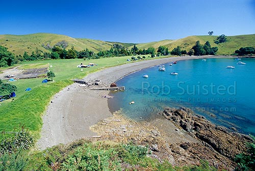 Home Bay DOC campsite / camping area, Motutapu Island, Hauraki Gulf, Motutapu Island, Auckland City District, Auckland Region, New Zealand (NZ) stock photo.