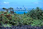 Auckland from Rangitoto Is.