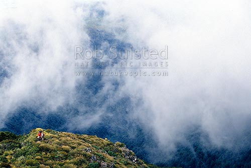 Trampers on the bush edge on the Mount (Mt) Holdsworth tramping track to Powell Hut. Misty cloud, Tararua Forest Park, Carterton District, Wellington Region, New Zealand (NZ) stock photo.