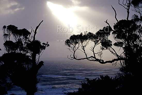 Sun rays through clouds over the coast and tree silhouettes, Punakaiki, Grey District, West Coast Region, New Zealand (NZ) stock photo.
