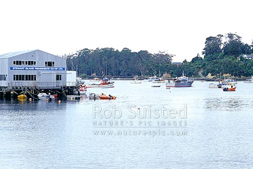 Fisherman's Wharf at Halfmoon Bay (Oban), Halfmoon Bay, Stewart Island District, Southland Region, New Zealand (NZ) stock photo.
