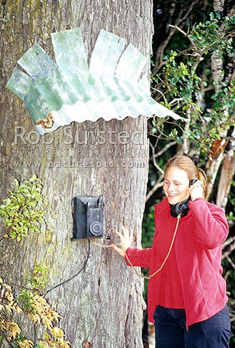 Woman using telephone on tree, Halfmoon Bay, Stewart Island District, Southland Region, New Zealand (NZ) stock photo.