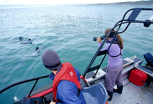 Hector's dolphin (Cephalorhynchus hectori) researcher Erin Green taking Photo ID shots in Te Waewae Bay, Te Waewae, Southland District, Southland Region, New Zealand (NZ) stock photo.