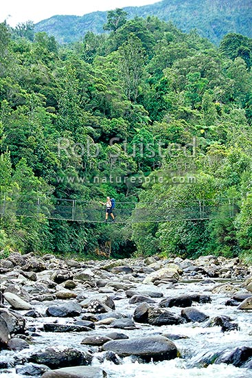 Tramper crossing a swingbridge over the Kauaeranga River en route to the Pinnacles Hut. Kauaeranga Kauri Trail, Kauaeranga Valley, Thames-Coromandel District, Waikato Region, New Zealand (NZ) stock photo.