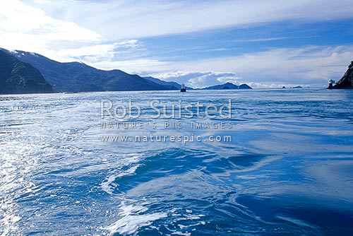 Strong currents passing through French Pass. D'Urville Island left. French Pass lighthouse right. Marlborough Sounds, French Pass, Marlborough District, Marlborough Region, New Zealand (NZ) stock photo.