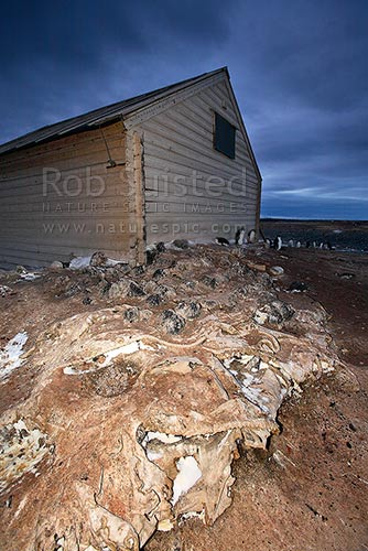 Borchgrevink's 1899 Southern Cross Expedition huts, Ridley Beach. Old sail remains foreground. Robertson Bay, Cape Adare, Ross Sea, Antarctica District, Antarctica Region, Antarctica stock photo.