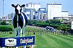 Dairyland at Taranaki