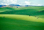 Rolling farmland, Taihape hill country