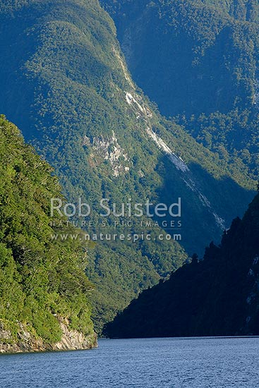 Steep cliffs of Doubtful Sound showing tree avalanches and slips. Beech forest (Nothofagus sp.), Fiordland, Southland District, Southland Region, New Zealand (NZ) stock photo.