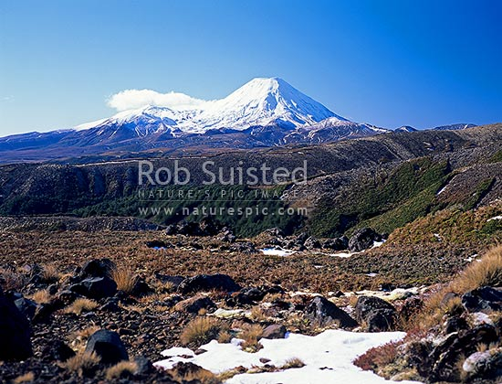 Mount (Mt) Ngauruhoe (2287m - right) and Mount (Mt) Tongariro (1967m left of Ngauruhoe) from Whakapapa, Tongariro National Park, Ruapehu District, Manawatu-Wanganui Region, New Zealand (NZ) stock photo.