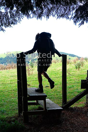 Tramper climbing over a fence stile at the bush edge. Hiking / tramping, Ruahine Forest Park, New Zealand (NZ) stock photo.