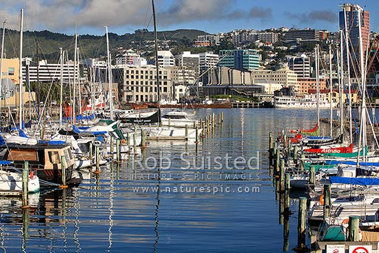 Yachts moored in Chaffers Marina, reflecting on calm sea, Wellington City CBD beyond, Wellington, Wellington City District, Wellington Region, New Zealand (NZ) stock photo.