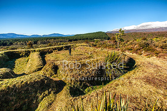 Visitor at Historic Upper Te Porere Redoubt (1869), Te Kooti's 'last stand'. Earthwork fortifications from NZ wars, Taurewa, Ruapehu District, Manawatu-Wanganui Region, New Zealand (NZ) stock photo.