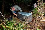 Weka in a cage trap