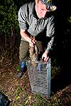 Removing weka from cage trap