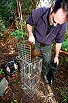 Worker releasing Weka from cage