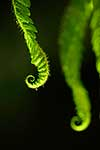 Close up young fern fronds