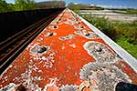Lichen on railway bridge