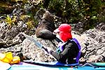 Kayaker with Fur Seal, Fiordland