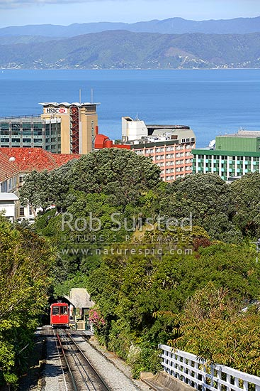 View from top of the Wellington Cable car over the city and harbour from Botanical gardens. Car stopped at Salamanca intermediate stop, Wellington, Wellington City District, Wellington Region, New Zealand (NZ) stock photo.