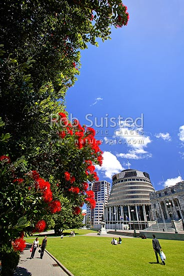 Parliament Buildings - Parliament House with The Beehive (Executive Wing) and Bowen House left. Pohutukawa flowers. Christmas time, Wellington, Wellington City District, Wellington Region, New Zealand (NZ) stock photo.