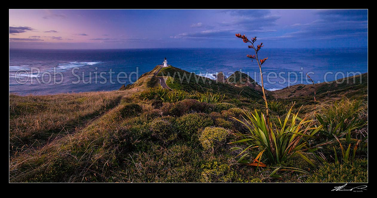 Image of Cape Reinga (Te Rerengawairua) lighthouse at dusk above Columbia Banks and Spirits Leap., North Cape. Flax bush (Phormium sp.) in foreground, Cape Reinga, Far North District, Northland Region, New Zealand (NZ) stock photo image