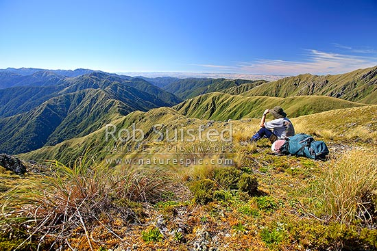 Tramper or hiker sitting on Bridge Peak (1421m) looking along the Southern Main Range of the Tararuas towards Maungahuka etc, Tararua Forest Park, Kapiti Coast District, Wellington Region, New Zealand (NZ) stock photo.