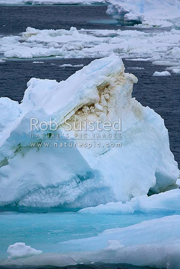 Photosynthetic algae growing in pack ice, or sea ice, stains the ice browny green, Ross Sea, Antarctica stock photo.