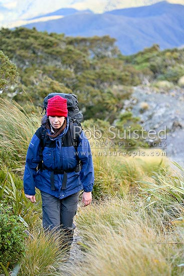 Tramper on track to Powell Hut and Mount Holdsworth. Dressed appropriately for cold winds and wintery conditions with windproof layers and hat, Tararua Forest Park, Masterton District, Wellington Region, New Zealand (NZ) stock photo.