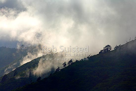 Moody misty rain clouds lifting off rainforest bush covered ridges after rain. Tararua range foothills, Waikanae, Kapiti Coast District, Wellington Region, New Zealand (NZ) stock photo.