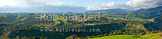 Rural panorama across lush spring farmland hillcountry and bush forest on the foothills of the Rauhine Range, Apiti, Manawatu District, Manawatu-Wanganui Region, New Zealand (NZ) stock photo.