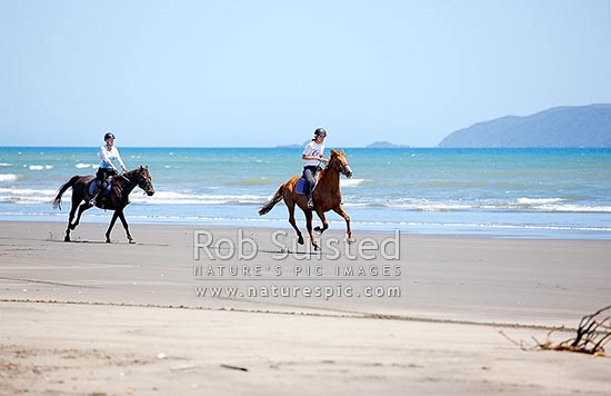 Two women riding horses on beach with sea behind. Galloping, Peka Peka Beach, Kapiti Coast District, Wellington Region, New Zealand (NZ) stock photo.